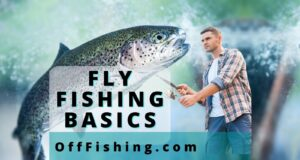 Fly Fishing Basics To Help You Catch Trout