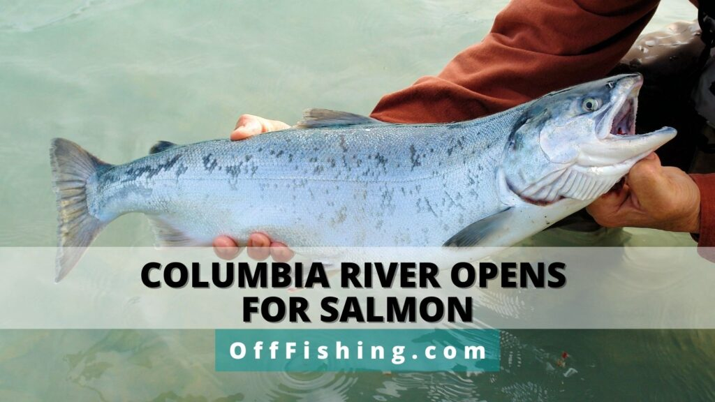 Oregon Reopens Columbia River for Salmon