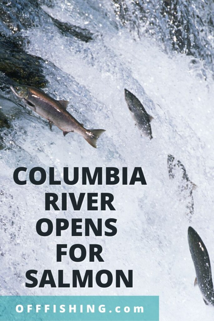 Oregon Reopens Columbia River for Salmon Pinterest pIN