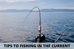 Fishing Tips To Catch Fish In The Current