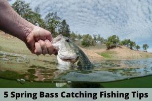 5 Spring Bass Catching Fishing Tips