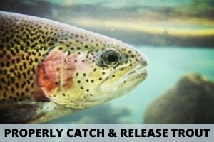How To Properly Catch and Release Trout Off Fishing