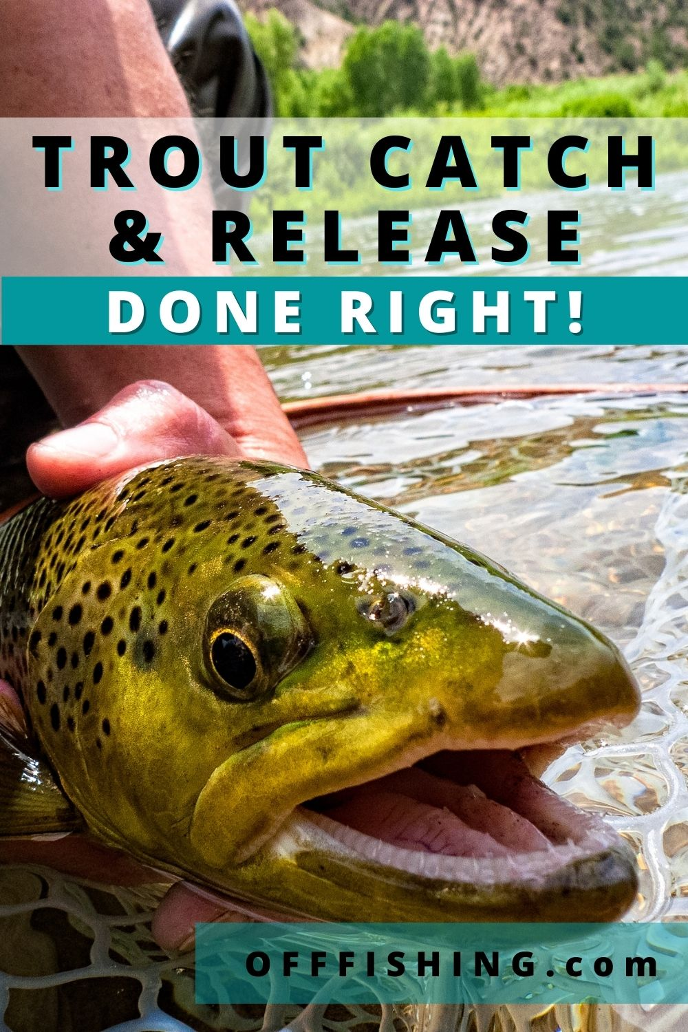 Trout Catch and Release Done Right Off Fishing