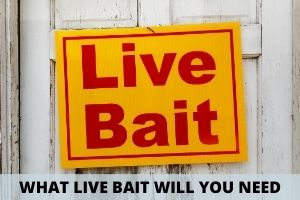 What Kind of Live Bait To Use