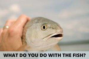 What to Do With The Fish You Caught